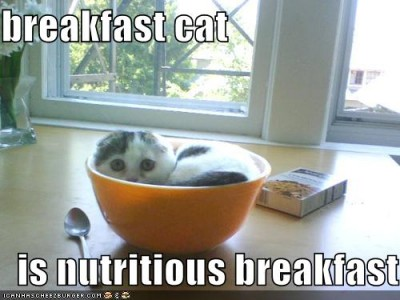 breakfast cat